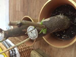 武蔵小杉観葉植物56hair